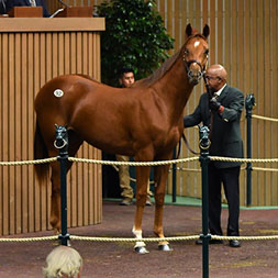 Thoroughbred racing partnership comprised of colts by Honor Code, Carpe Diem, Curlin, and Pioneerof the Nile.