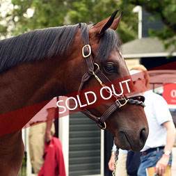 Lunar Illusion (Malibu Moon - Kiss the Lady) is sold out.