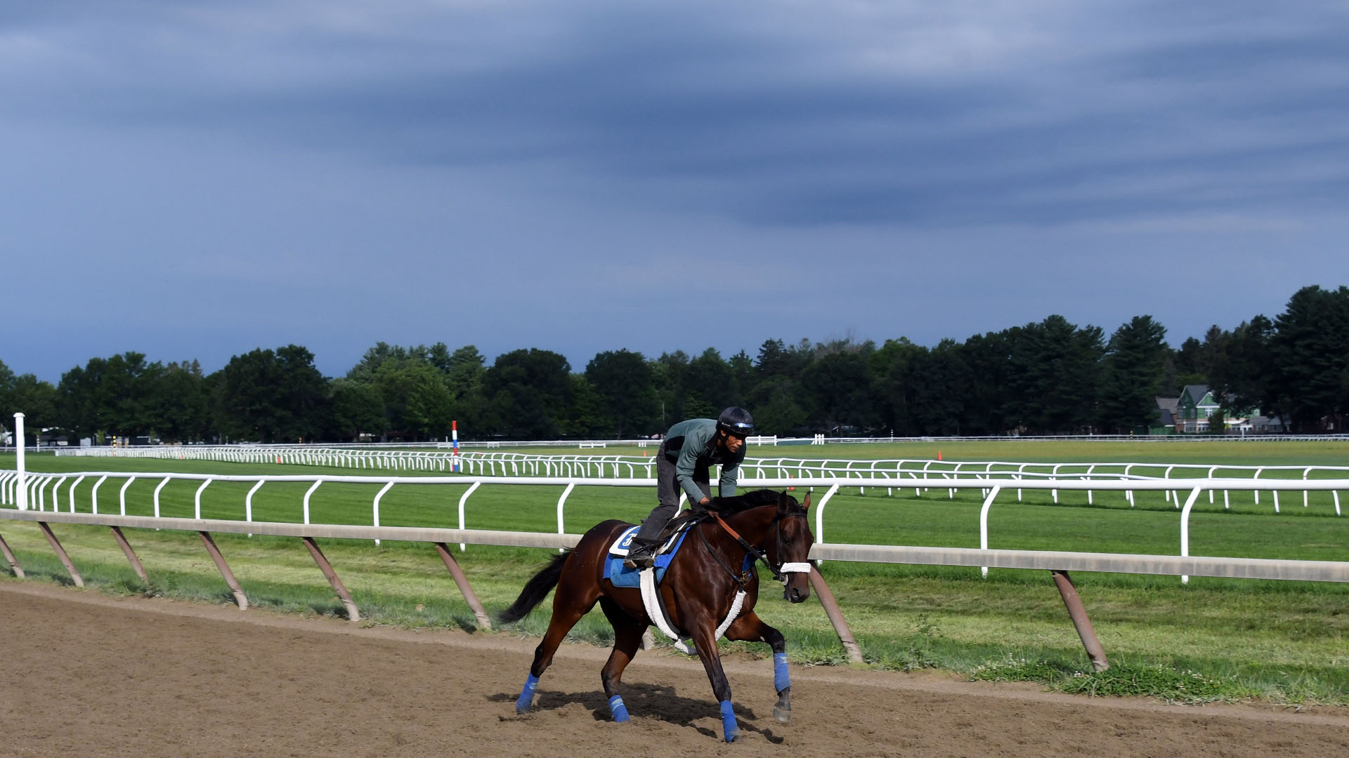 Mihos galloping at Saratoga Race Course.