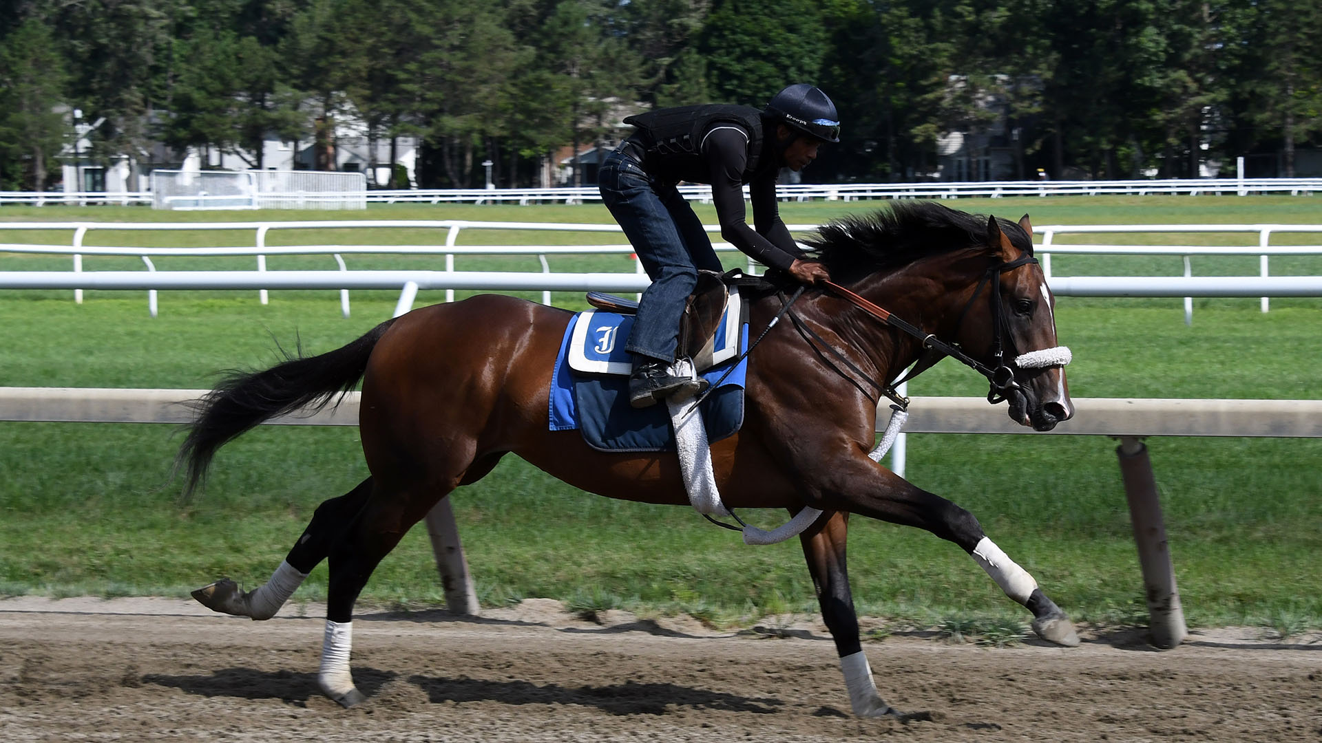 Punchline galloping at Saratoga Race Course.