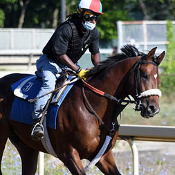 Royal Realm (Empire Maker - Zelda Rose) gallops at Belmont Park. Royal Realm is a member of the Cardinal, LLC thoroughbred racing partnership.