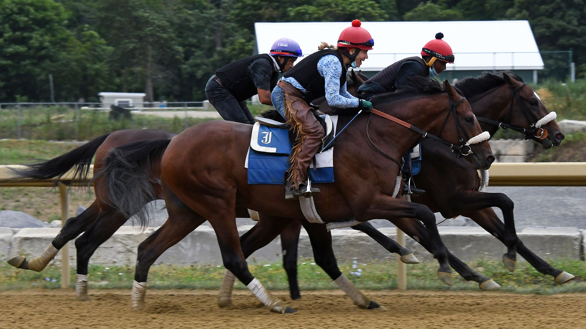 Royal Realm (Empire Maker - Zelda Rose) works at Belmont Park. Royal Realm is a member of the Cardinal, LLC thoroughbred racing partnership.