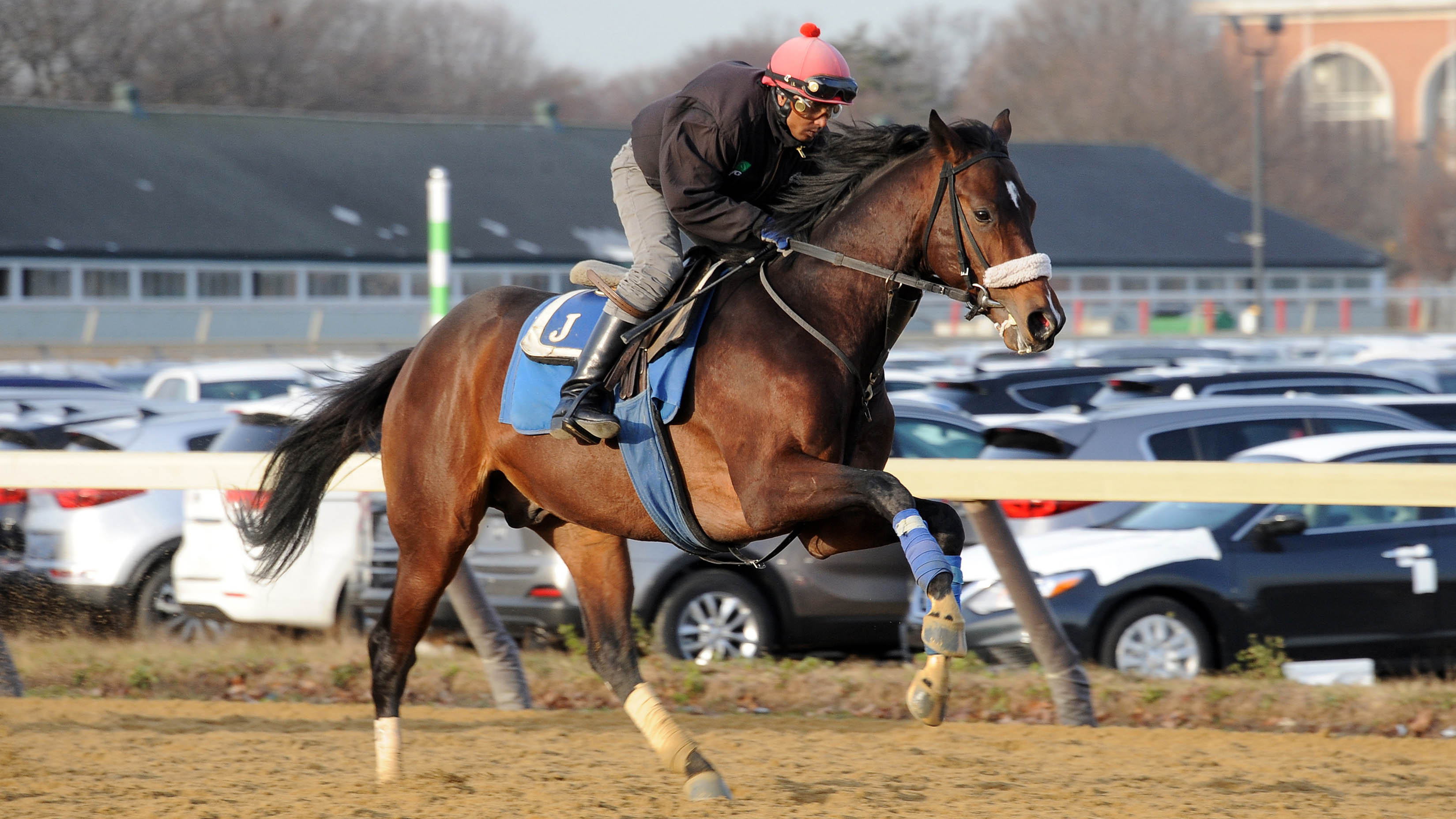 Czech Rate galloping at Belmont Park.