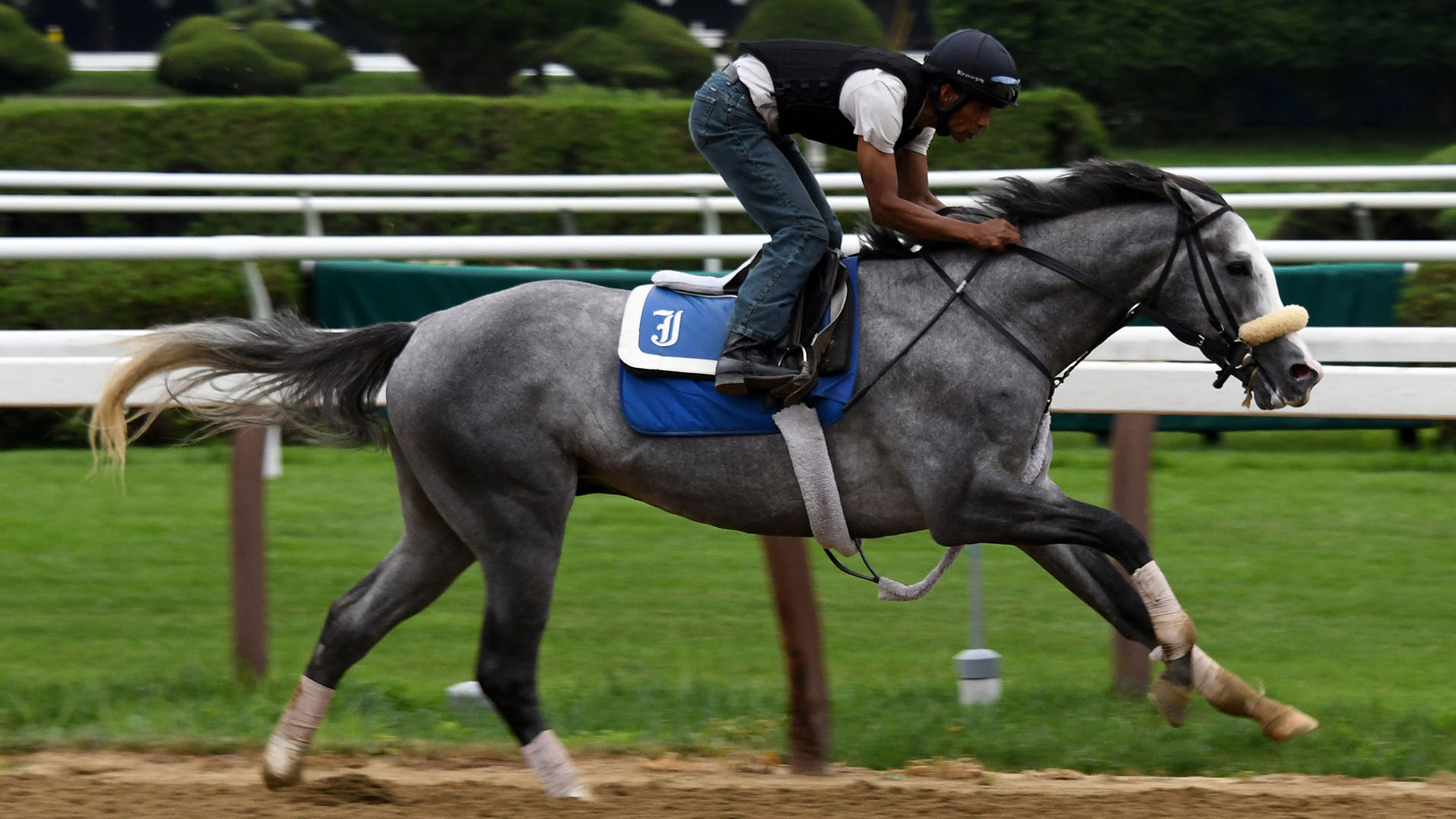 Illudere breezing at Saratoga Race Course.