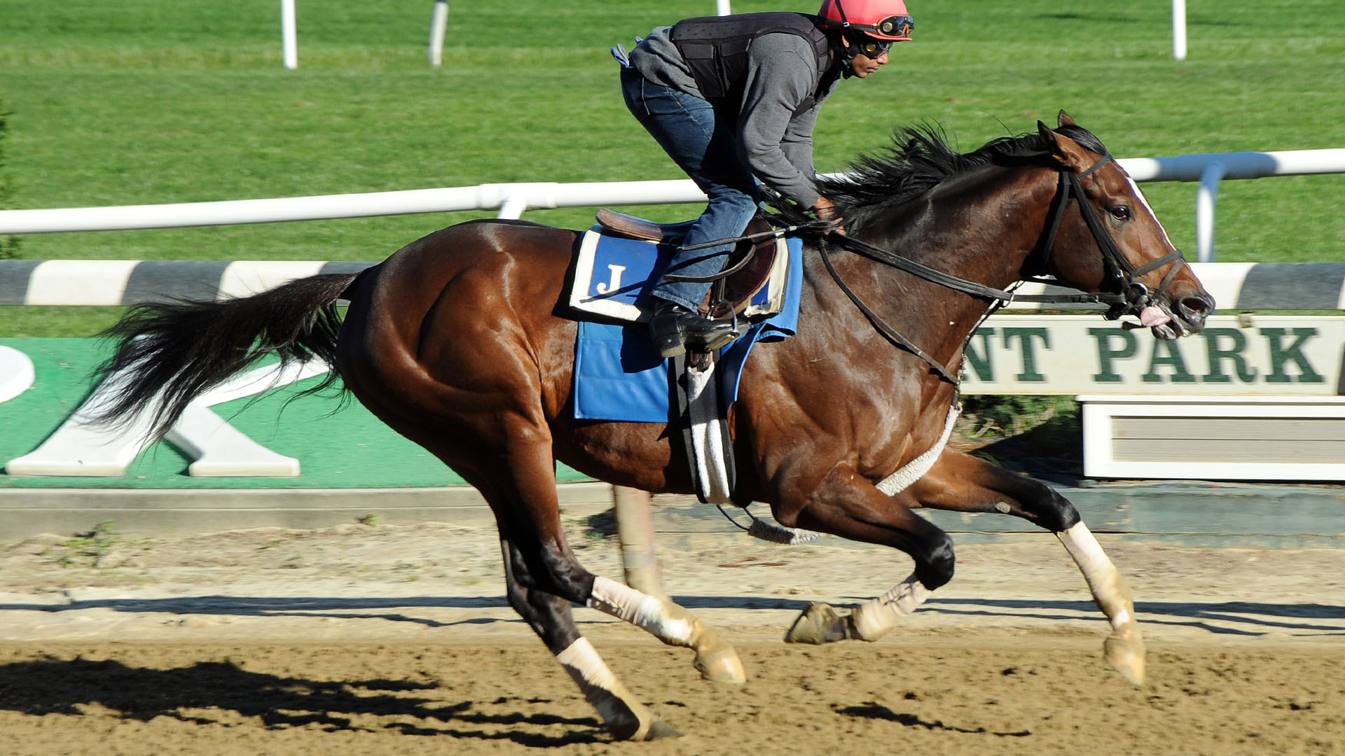Preservationist breezing at Belmont Park.