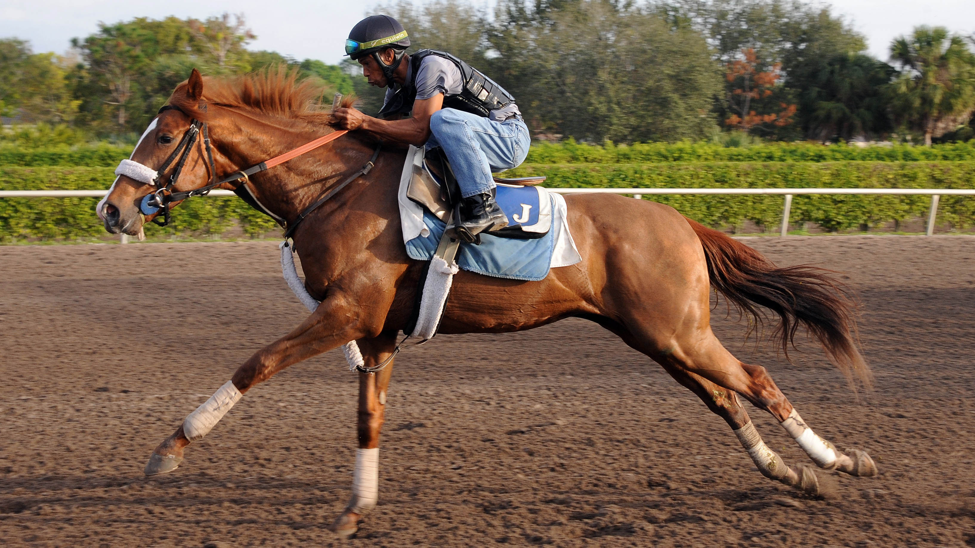 Pirate's Treasure breezing at Palm Meadows.