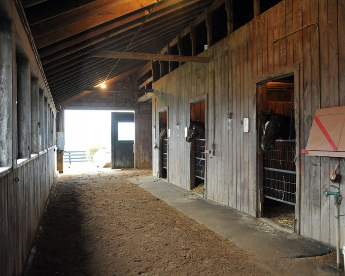 Colts keep an eye on the barn at Centennial Farms in Middleburg, VA.