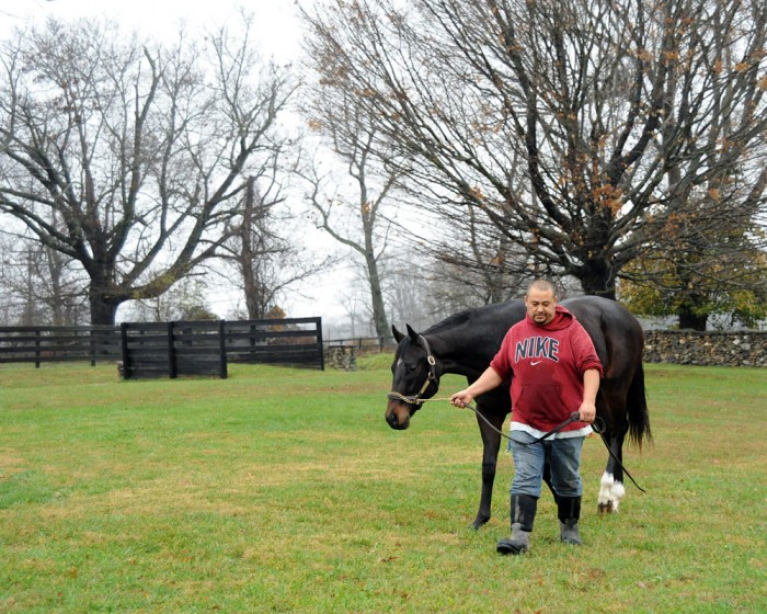 The Medaglia d'Oro colt strides over the grass at Centennial Farms in Middleburg, VA.