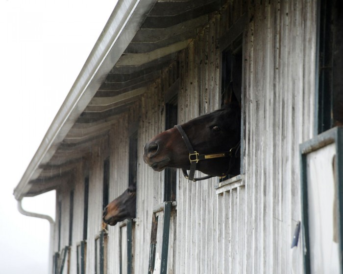 Swing Hard takes advantage of his window at Centennial Farms in Middleburg, VA.