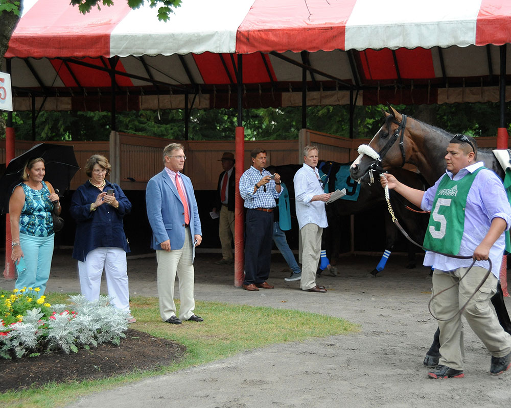 Adulator and Centennial Farms keep an eye on each other in the Saratoga paddock.