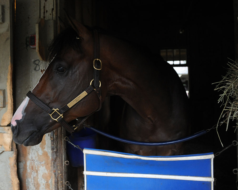 Adulator looking proud back in the barn after a memorable Saratoga win.