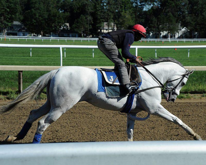 Juba galloping at Saratoga.