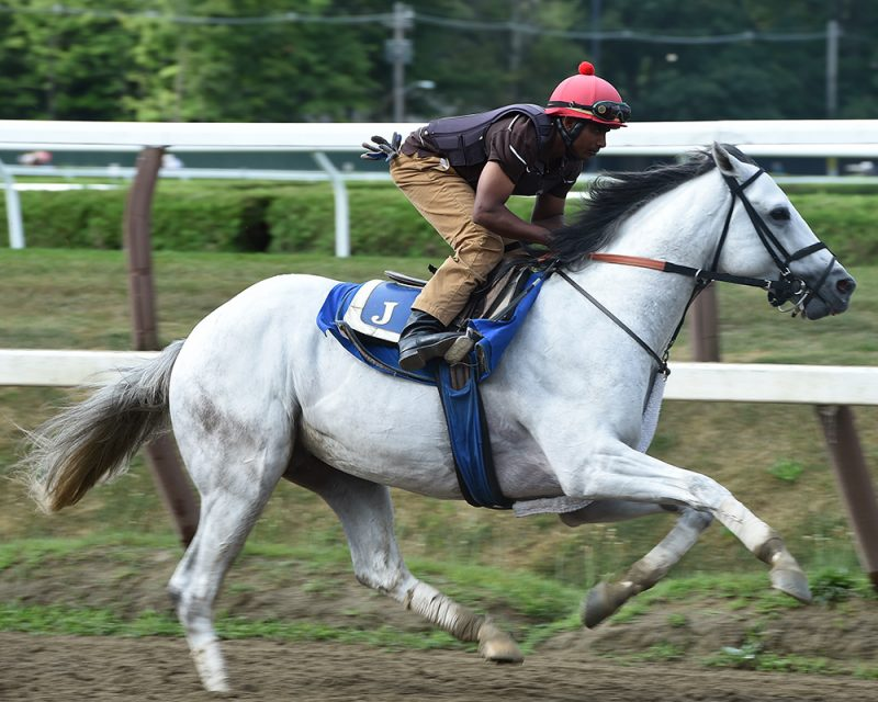 Juba breezing at Saratoga.