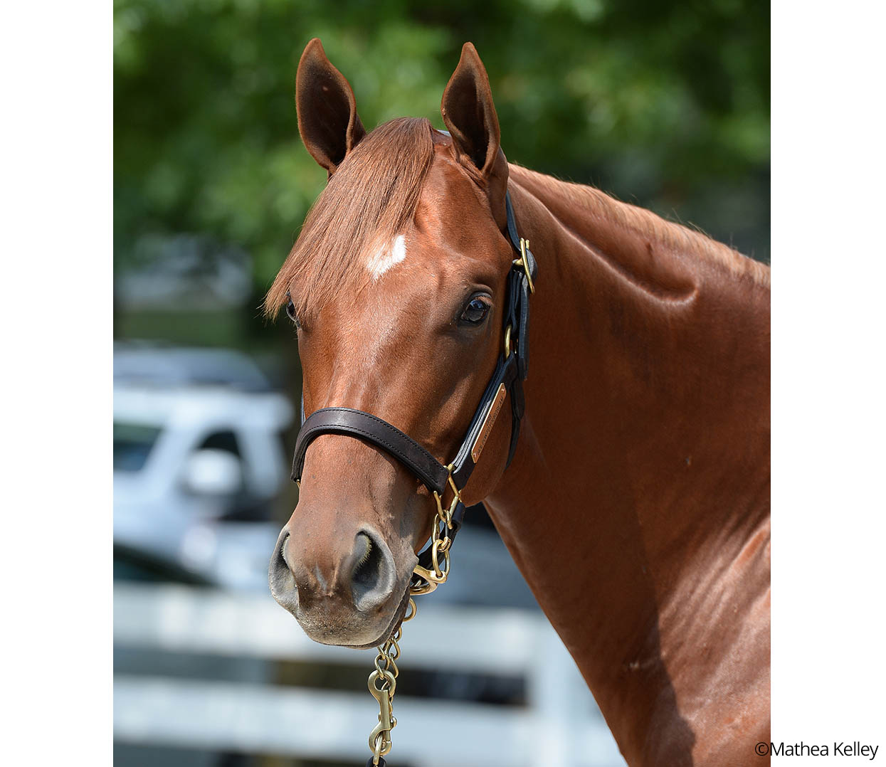 Orb - Holdontoyourdream colt