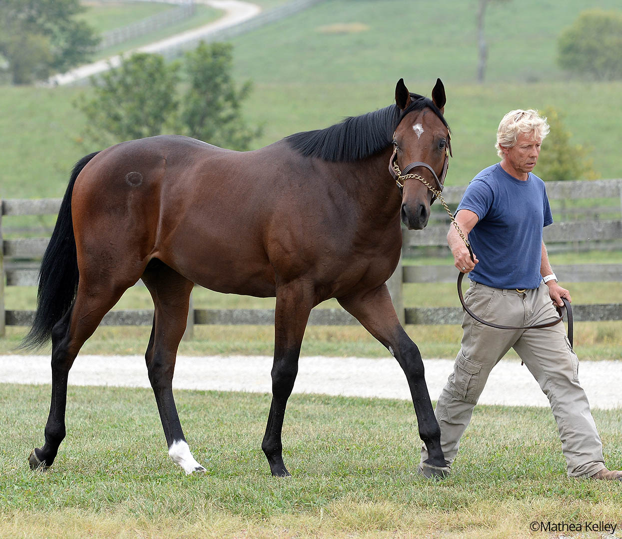Pioneerof the Nile - La Maestranza colt