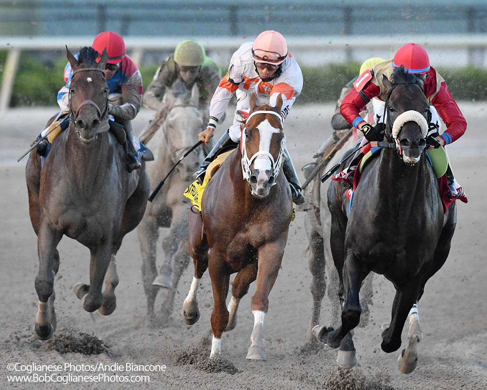 Unified leads coming off the turn in the G3 Gulfstream Park Sprint.