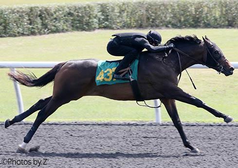 Candygram, Candy Ride colt, Hip 437, 2017 OBS March 2 Year Old Sale