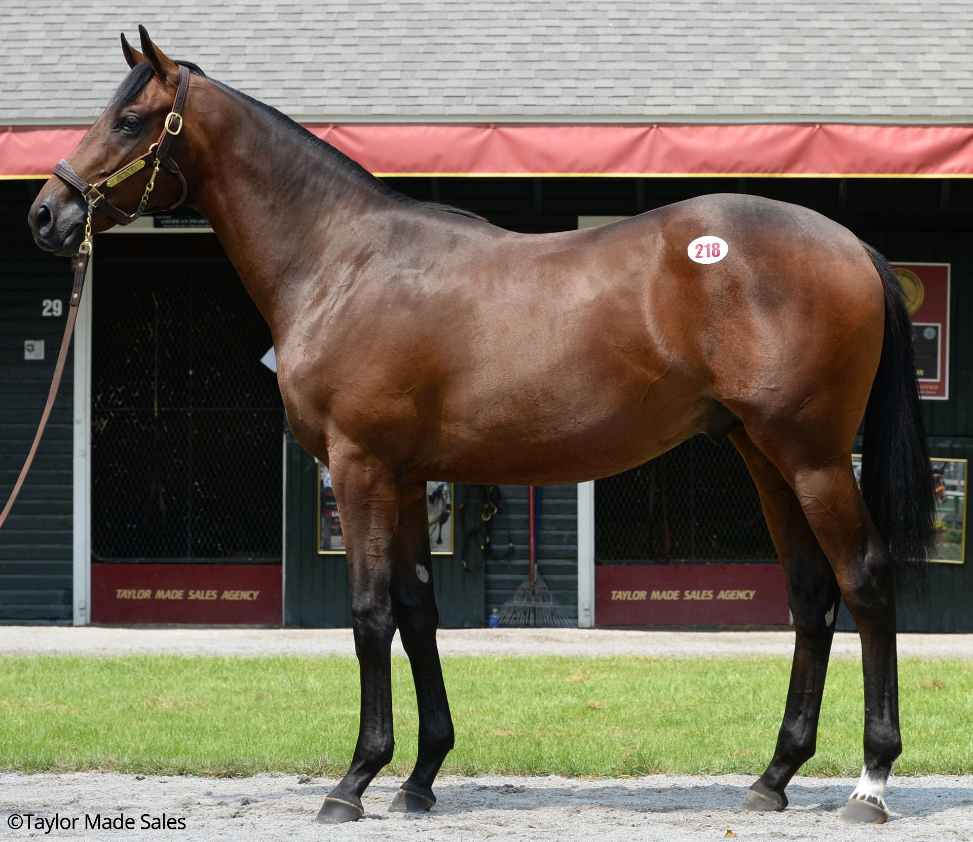 Hip 218, 2017 Fasig-Saratoga Select Sale, Malibu Moon - Kiss the Lady (Quiet American)