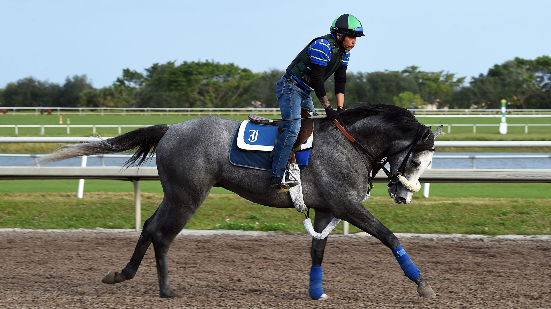 Illudere gallops at Palm Meadows Thoroughbred Training Center in Boynton Beach, Florida.