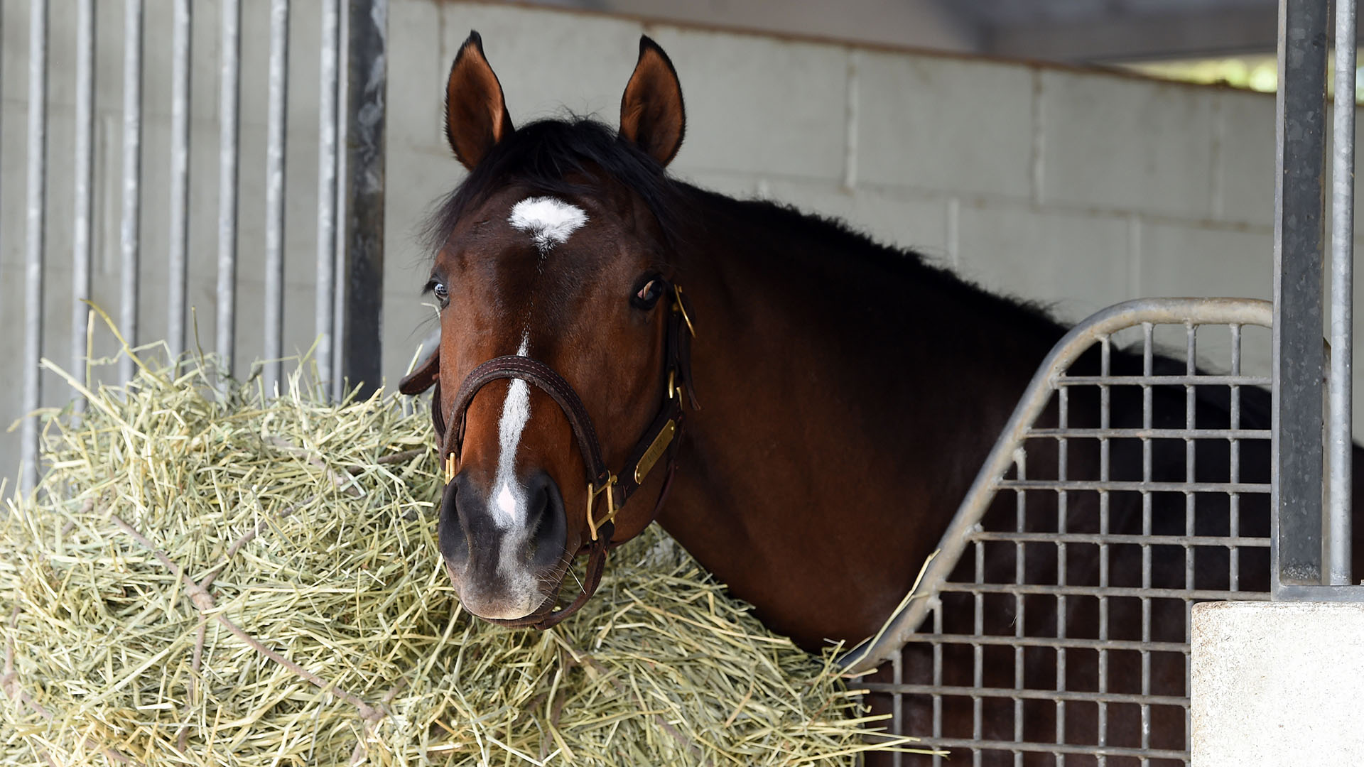 Mintz relaxes in his stall at Palm Meadows Thoroughbred Training Center in Boynton Beach, Florida.