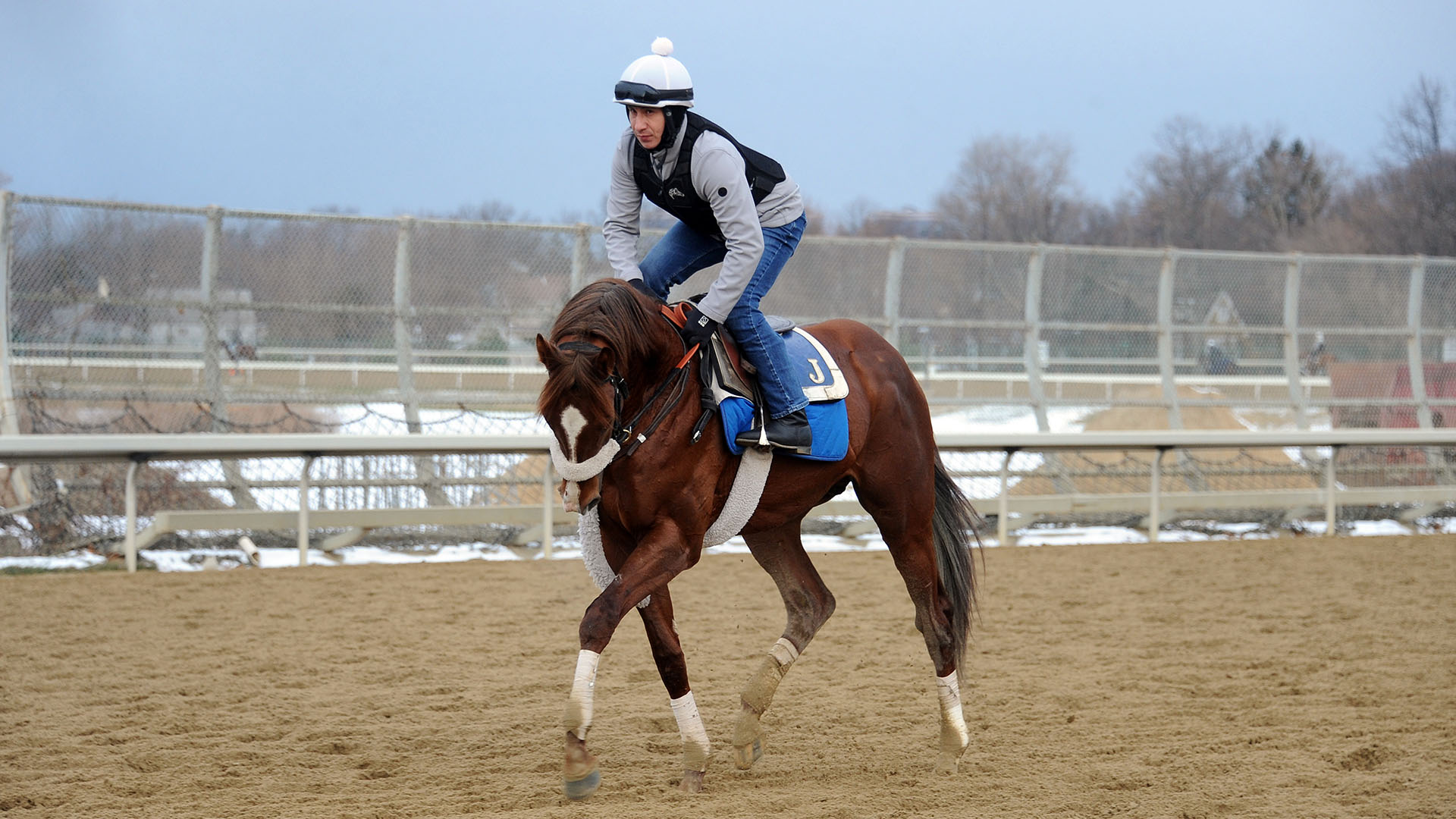 Pirate's Treasure jogs at Belmont Park.