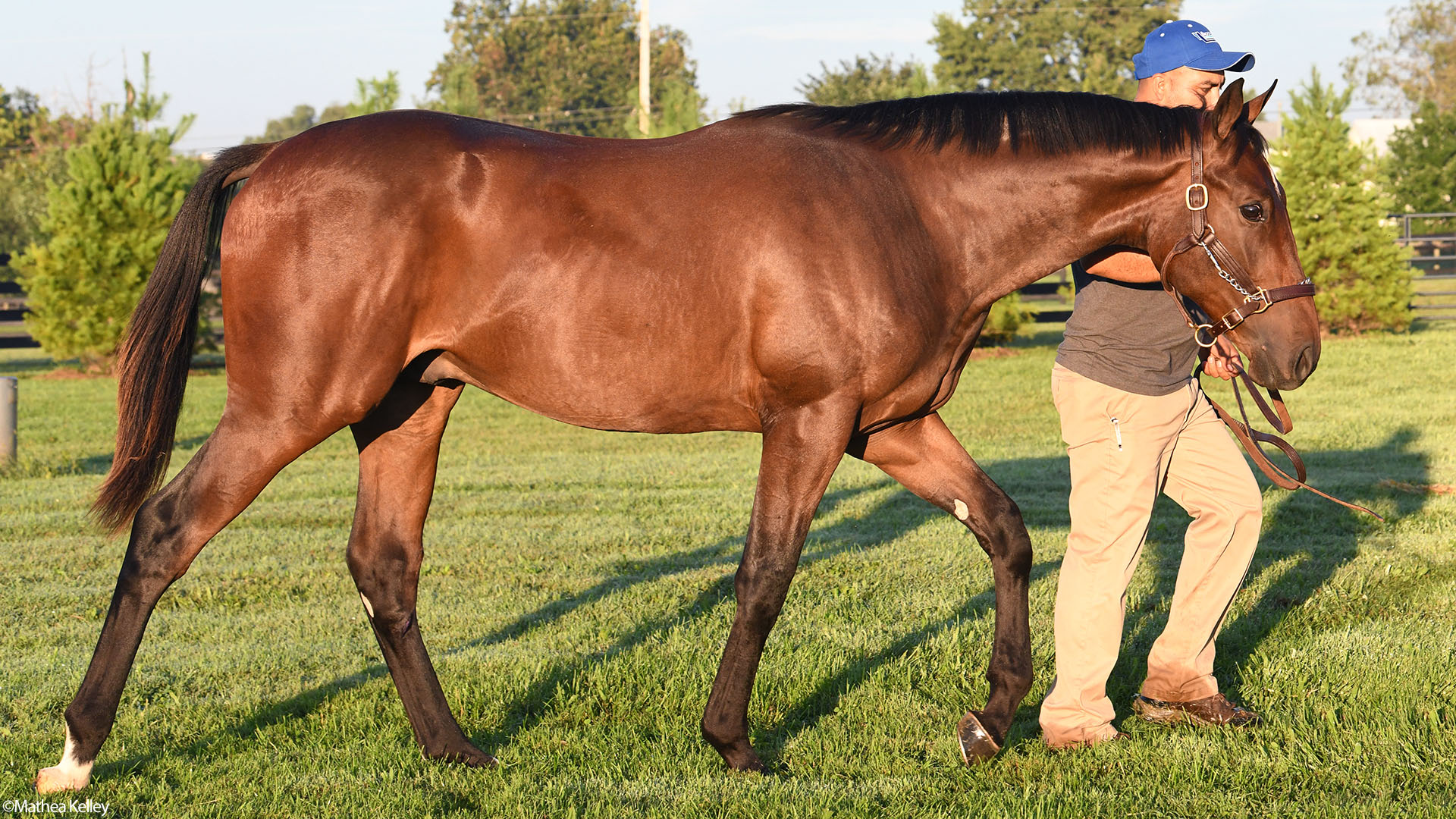 Pioneerof the Nile - Delicate Affair, by Langfuhr