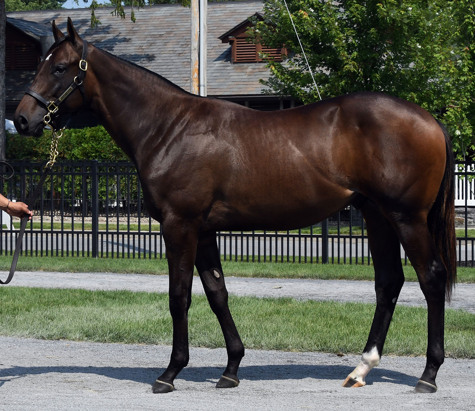 Candy Ride colt out of the Empire Maker mare Empire Desire, purchased at Fasig-Tipton Saratoga and available for a thoroughbred racing partnership.