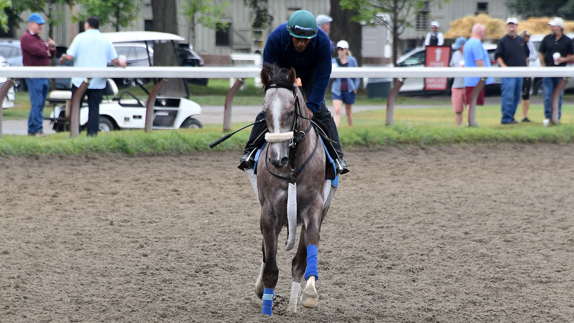 Ethos (Ghostzapper - Happy Now), owned as part of a thoroughbred racing partnership with Centennial Farms. Shown at Saratoga Race Course.