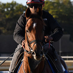 Life On Top (Carpe Diem - Kissed by a Star), owned as part of a thoroughbred racing partnership with Centennial Farms. Shown at Belmont Park.