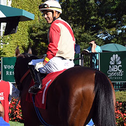 Stakes winner Mihos (Cairo Prince - Feline Flatline), owned as part of a thoroughbred racing partnership with Centennial Farms. Winner of the Mucho Macho Man Stakes at Gulfstream Park. Shown at Belmont Park.