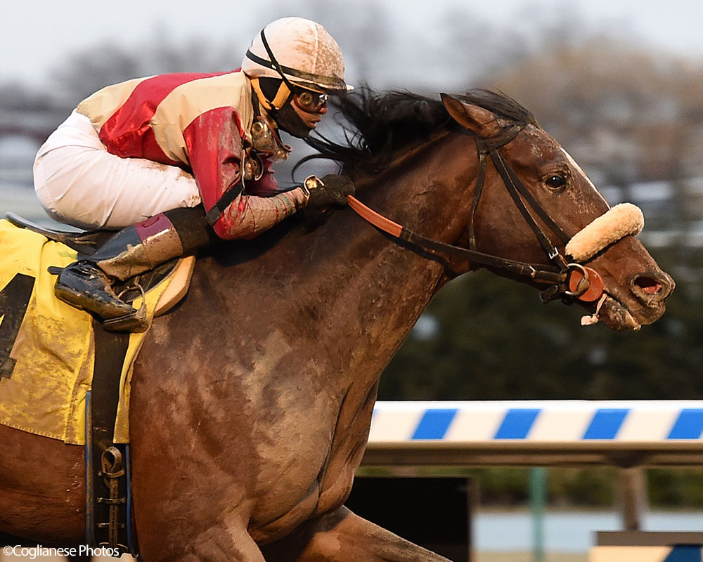 Preservationist rolls to a four-length win at Aqueduct Racetrack over Mr. Buff.