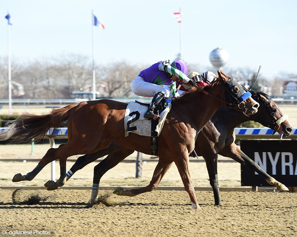 Preservationist breaks his maiden over Stan The Man at Aqueduct.