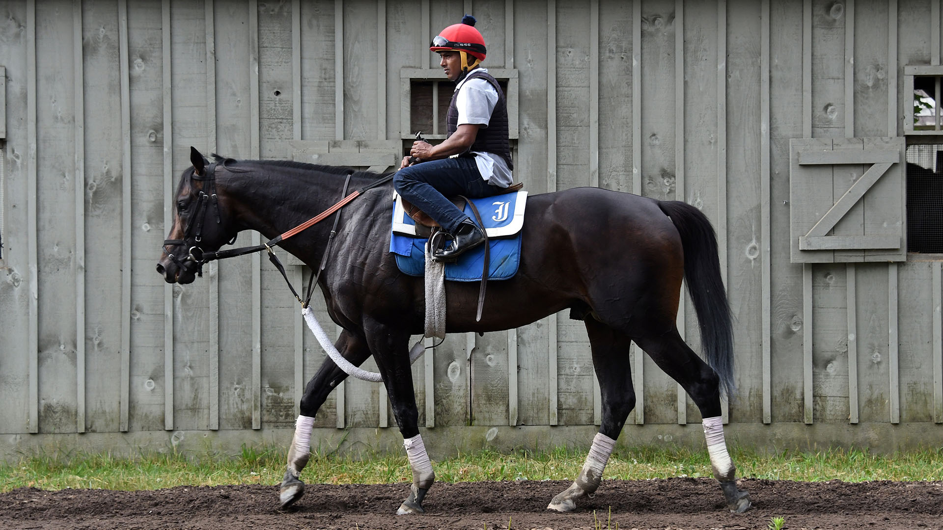 Stakes-placed Candygram enjoys a morning at Saratoga Race Course.