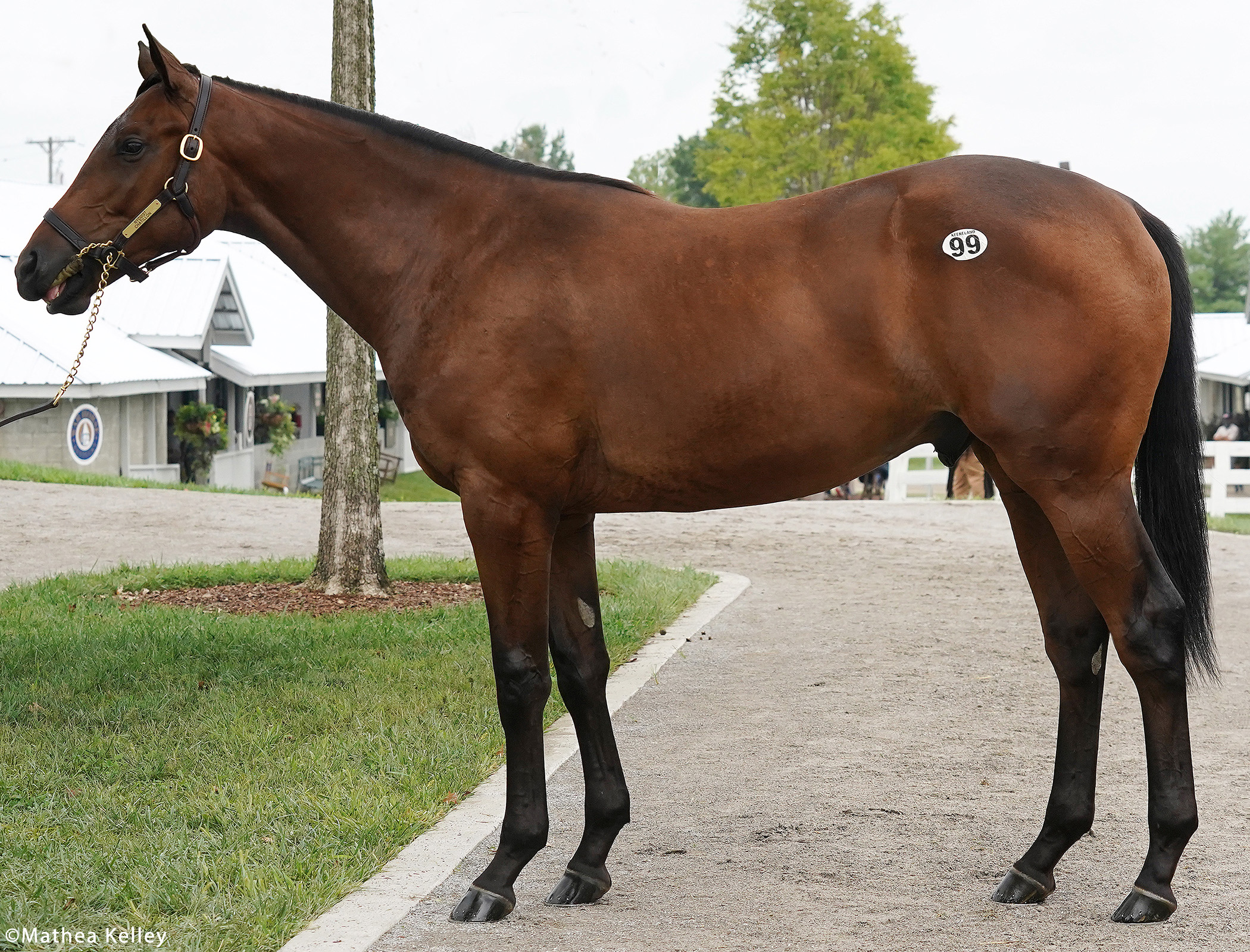 Nyquist colt out of the Ghostzapper mare Chatillon, purchased at Keeneland's September Yearling Sale and available for a thoroughbred racing partnership.