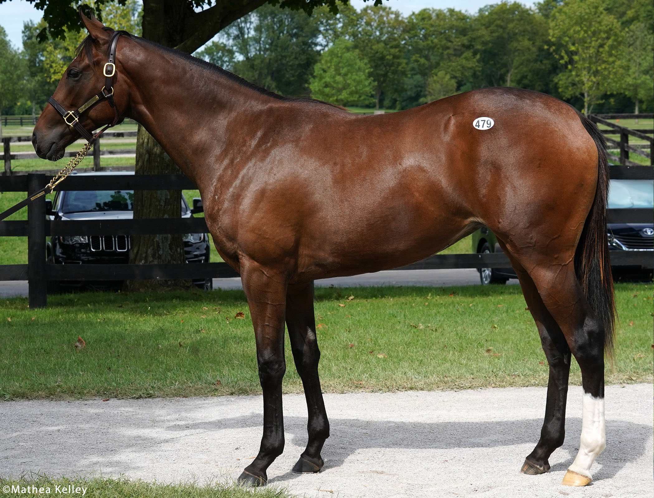 Unified filly out of the Haynesfield mare Another Ghazo, purchased at Fasig-Tipton's Selected Yearling Showcase and available for a thoroughbred racing partnership.