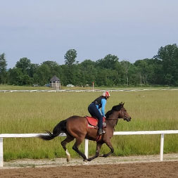 Out of Many (Unified - Another Ghazo), part of the Unified thoroughbred racing partnership, galloping at the Middleburg Training Center in May of 2021.