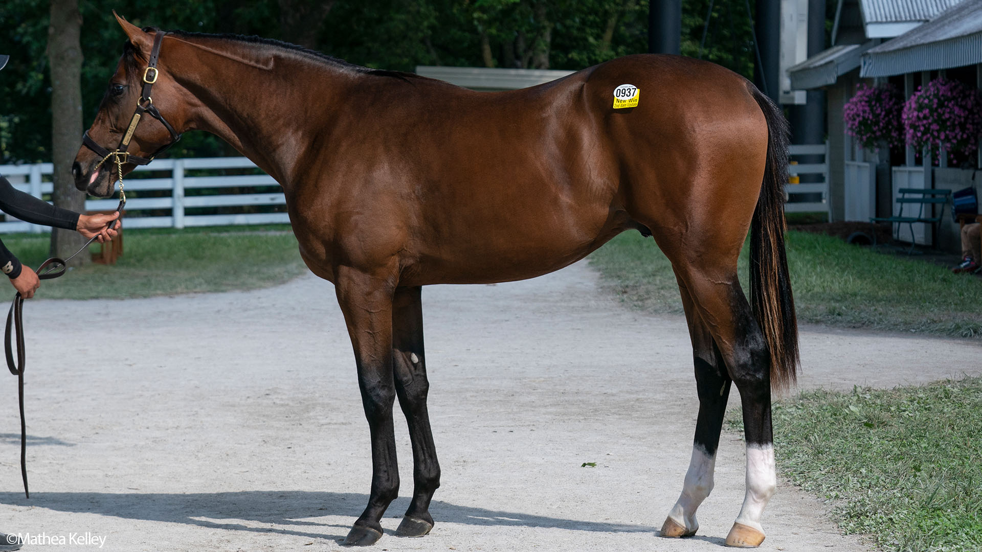 Candy Ride colt out of the Tiznow mare Well Lived, purchased at the Keeneland September Sale and available in the Elmont thoroughbred racing partnership.