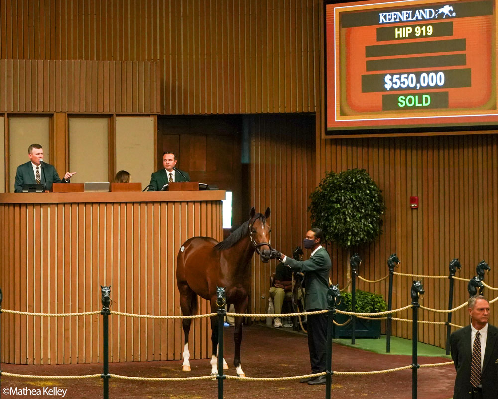 The 2021 Elmont LLC thoroughbred racing partnership is comprised of four colts purchased at the 2021 Keeneland September Sale. They are sons of Blame, Mastery, Violence, and Candy Ride.