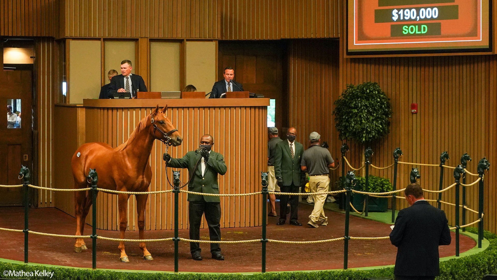 Mastery colt out of the Street Cry mare Spring Street, purchased at the Keeneland September Sale and available in the Elmont thoroughbred racing partnership.
