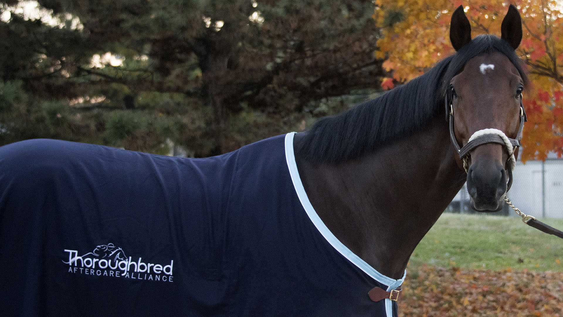 Multiple graded stakes winner Rocketry, a three-time track record setter, and part of the Crescent thoroughbred racing partnership. He's shown sporting his Thoroughbred Aftercare Alliance blanket.